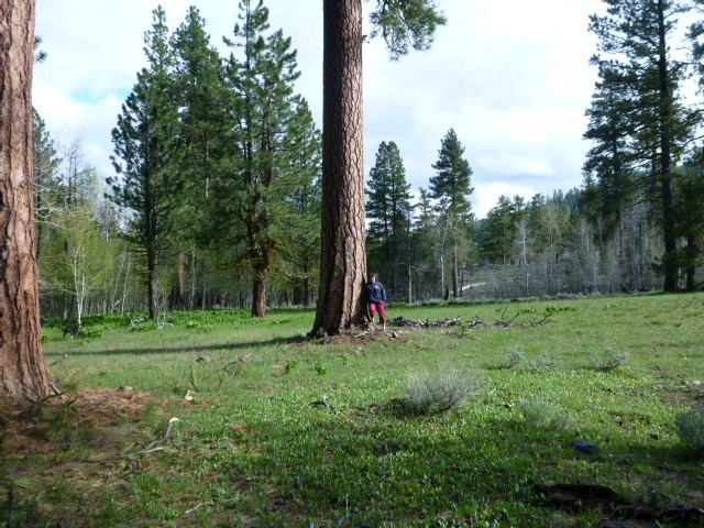 Gina with one of the ponderosa pines at camp.